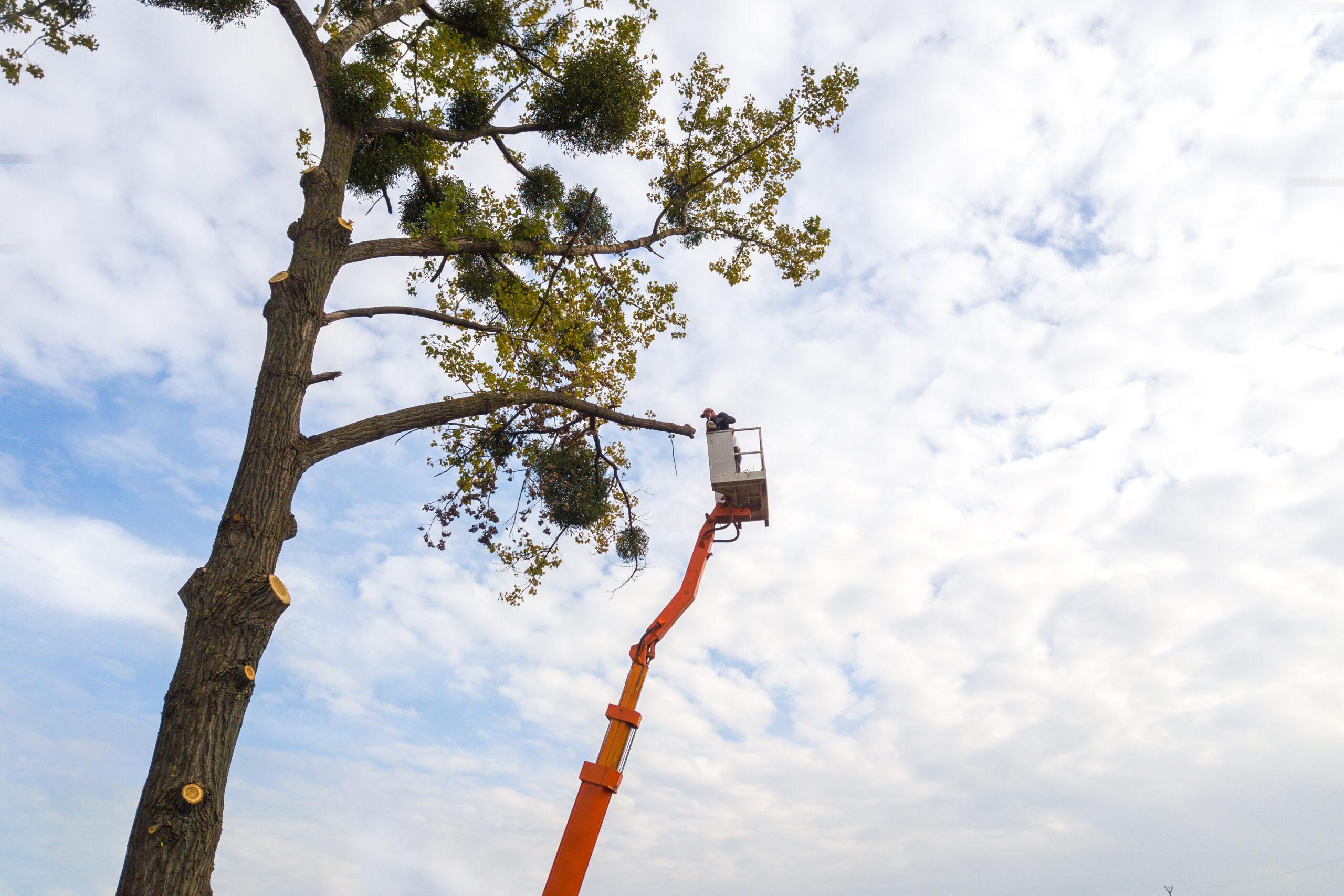 Tree Services Marketing